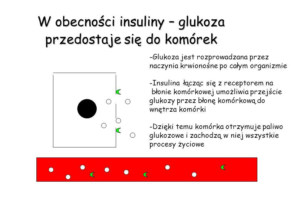W obecności insuliny – glukoza przedostaje się do komórek -Glukoza jest rozprowadzana przez naczynia krwionośne po całym organizmie -Insulina łącząc s