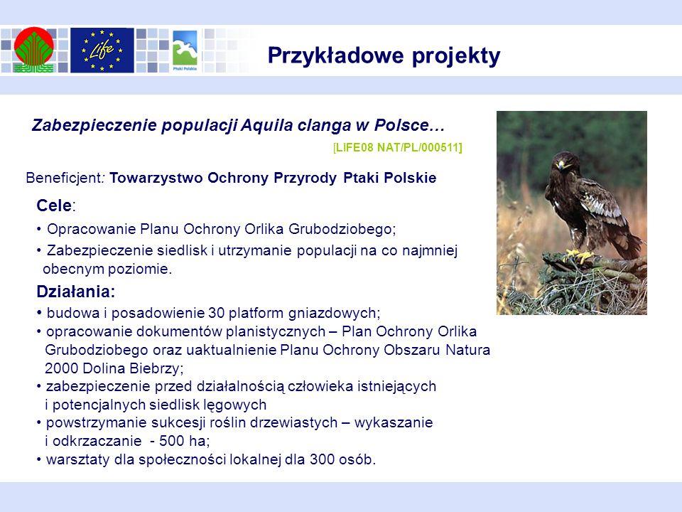 Cele: Opracowanie Planu Ochrony Orlika Grubodziobego; Zabezpieczenie siedlisk i utrzymanie populacji na co najmniej obecnym poziomie. Zabezpieczenie p