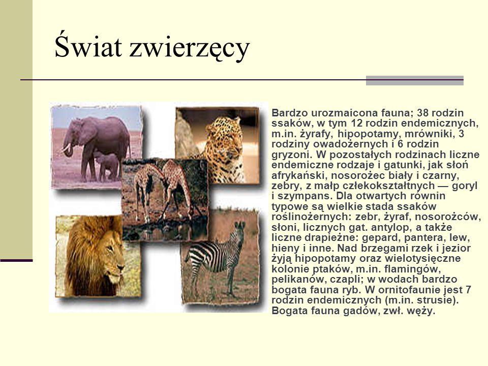 Świat zwierzęcy Bardzo urozmaicona fauna; 38 rodzin ssaków, w tym 12 rodzin endemicznych, m.in. żyrafy, hipopotamy, mrówniki, 3 rodziny owadożernych i