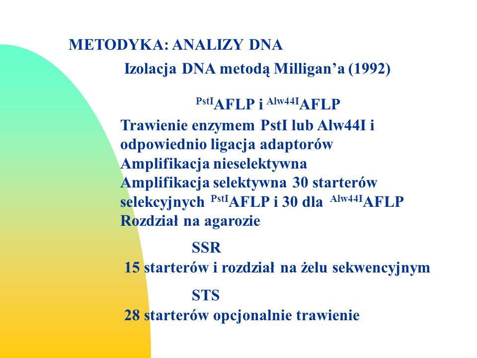 METODYKA: ANALIZY DNA Trawienie enzymem PstI lub Alw44I i odpowiednio ligacja adaptorów Amplifikacja nieselektywna Amplifikacja selektywna 30 starterów selekcyjnych PstI AFLP i 30 dla Alw44I AFLP Rozdział na agarozie PstI AFLP i Alw44I AFLP Izolacja DNA metodą Milligana (1992) SSR 15 starterów i rozdział na żelu sekwencyjnym STS 28 starterów opcjonalnie trawienie
