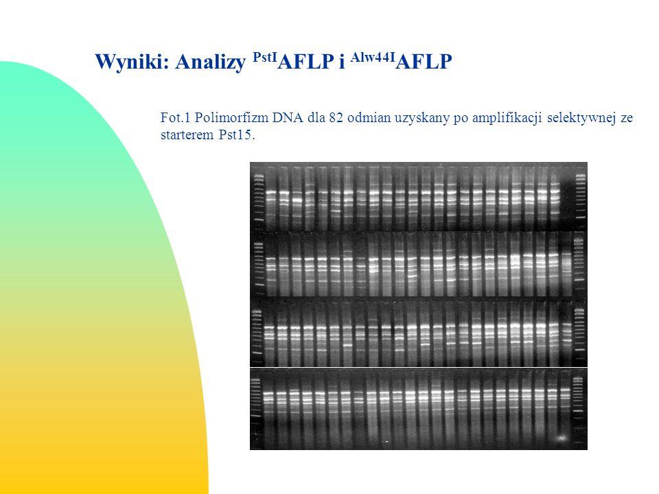 Fot.1 Polimorfizm DNA dla 82 odmian uzyskany po amplifikacji selektywnej ze starterem Pst15.