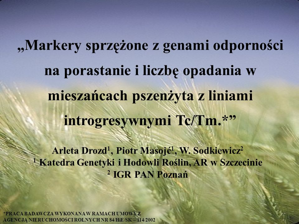 Markery sprzężone z genami odporności na porastanie i liczbę opadania w mieszańcach pszenżyta z liniami introgresywnymi Tc/Tm.* Arleta Drozd 1, Piotr Masojć 1, W.