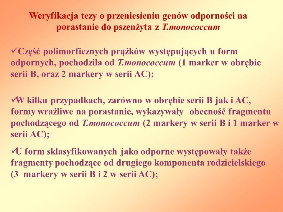 Część polimorficznych prążków występujących u form odpornych, pochodziła od T.monococcum (1 marker w obrębie serii B, oraz 2 markery w serii AC); Weryfikacja tezy o przeniesieniu genów odporności na porastanie do pszenżyta z T.monococcum W kilku przypadkach, zarówno w obrębie serii B jak i AC, formy wrażliwe na porastanie, wykazywały obecność fragmentu pochodzącego od T.monococcum (2 markery w serii B i 1 marker w serii AC); U form sklasyfikowanych jako odporne występowały także fragmenty pochodzące od drugiego komponenta rodzicielskiego (3 markery w serii B i 2 w serii AC);
