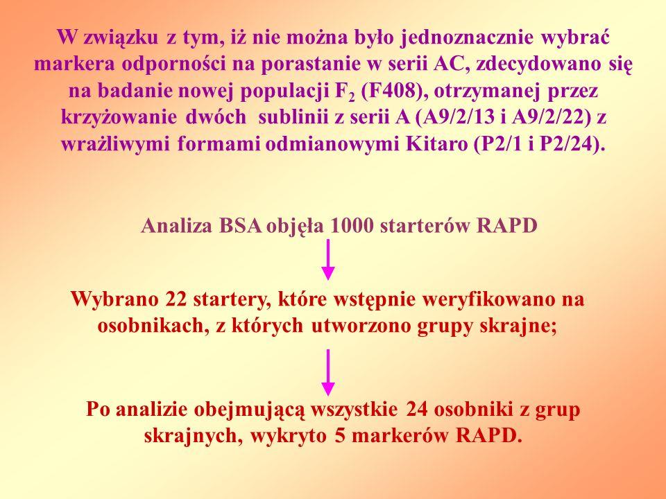 W związku z tym, iż nie można było jednoznacznie wybrać markera odporności na porastanie w serii AC, zdecydowano się na badanie nowej populacji F 2 (F408), otrzymanej przez krzyżowanie dwóch sublinii z serii A (A9/2/13 i A9/2/22) z wrażliwymi formami odmianowymi Kitaro (P2/1 i P2/24).