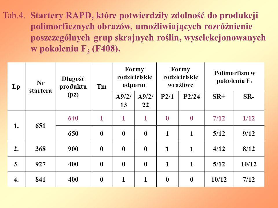 Tab.4. Startery RAPD, które potwierdziły zdolność do produkcji polimorficznych obrazów, umożliwiających rozróżnienie poszczególnych grup skrajnych roś