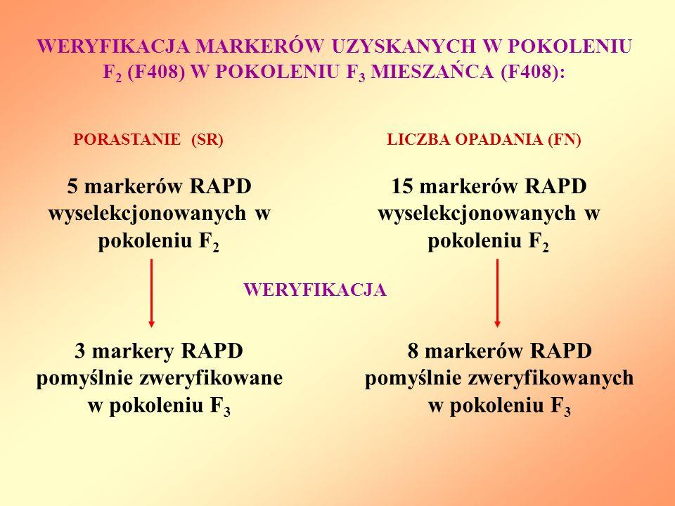 WERYFIKACJA MARKERÓW UZYSKANYCH W POKOLENIU F 2 (F408) W POKOLENIU F 3 MIESZAŃCA (F408): 15 markerów RAPD wyselekcjonowanych w pokoleniu F 2 LICZBA OP