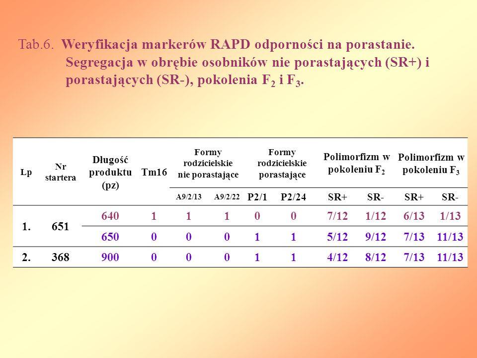 Lp Nr startera Długość produktu (pz) Tm16 Formy rodzicielskie nie porastające Formy rodzicielskie porastające Polimorfizm w pokoleniu F 2 Polimorfizm