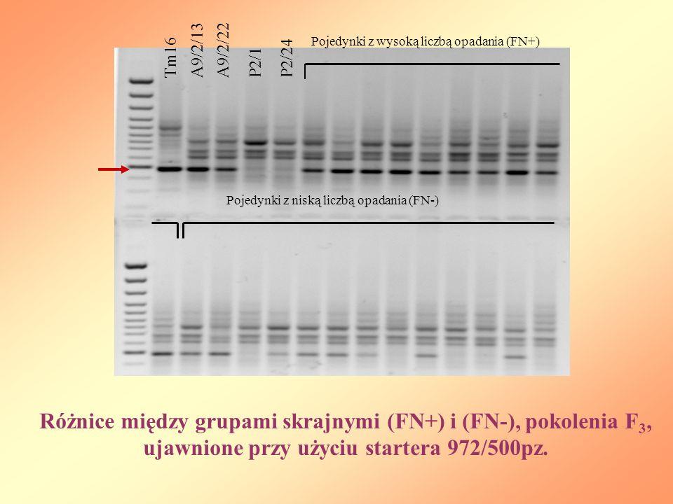 Tm16A9/2/22P2/1P2/24A9/2/13 Różnice między grupami skrajnymi (FN+) i (FN-), pokolenia F 3, ujawnione przy użyciu startera 972/500pz.