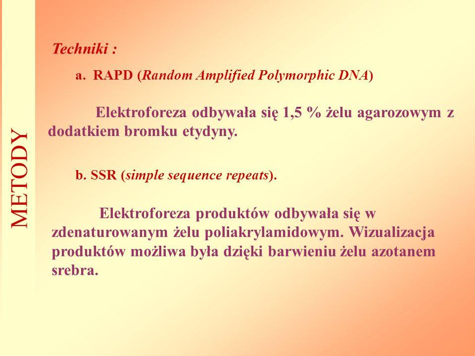 Techniki : a.RAPD (Random Amplified Polymorphic DNA) Elektroforeza odbywała się 1,5 % żelu agarozowym z dodatkiem bromku etydyny. METODY b. SSR (simpl