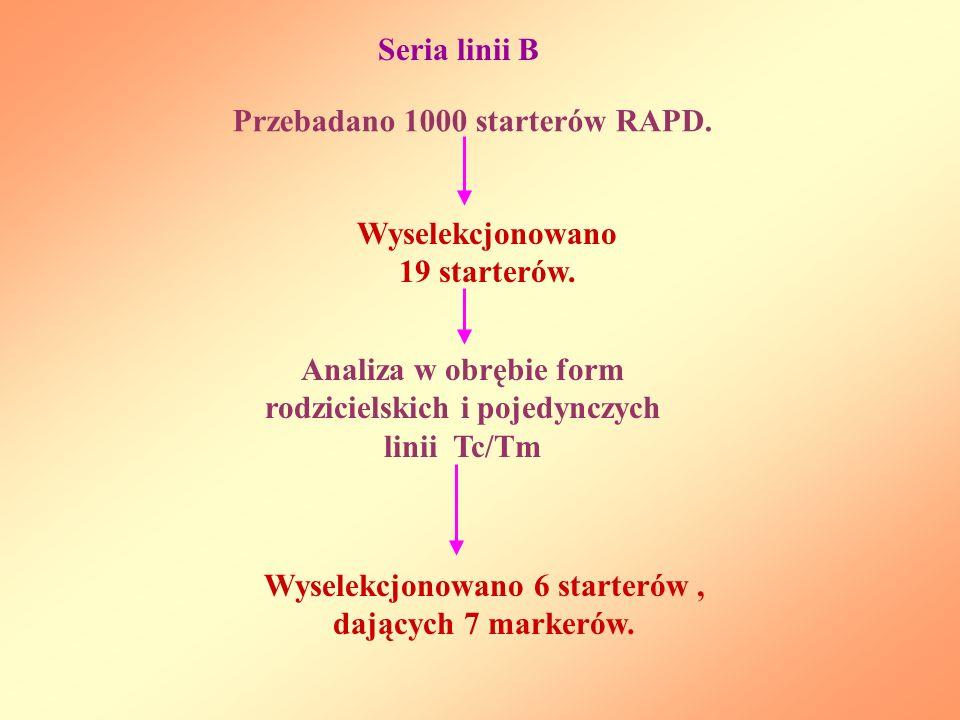 Przebadano 1000 starterów RAPD.Seria linii B Wyselekcjonowano 19 starterów.