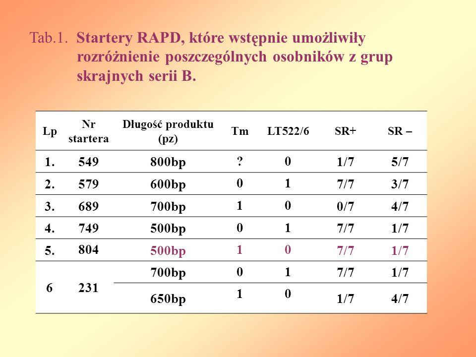 Tab.1. Startery RAPD, które wstępnie umożliwiły rozróżnienie poszczególnych osobników z grup skrajnych serii B. Lp Nr startera Długość produktu (pz) T