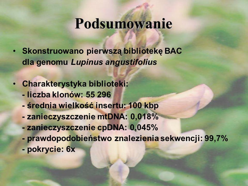 Podsumowanie Skonstruowano pierwszą bibliotekę BAC dla genomu Lupinus angustifolius Charakterystyka biblioteki: - liczba klonów: 55 296 - średnia wiel