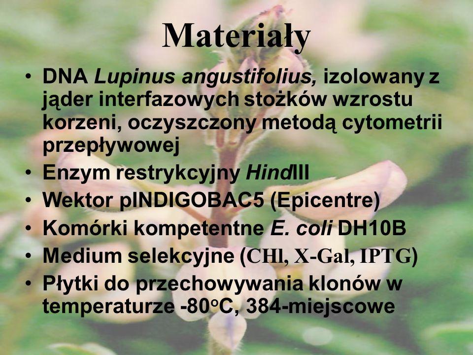 Podsumowanie Skonstruowano pierwszą bibliotekę BAC dla genomu Lupinus angustifolius Charakterystyka biblioteki: - liczba klonów: 55 296 - średnia wielkość insertu: 100 kbp - zanieczyszczenie mtDNA: 0,018% - zanieczyszczenie cpDNA: 0,045% - prawdopodobieństwo znalezienia sekwencji: 99,7% - pokrycie: 6x