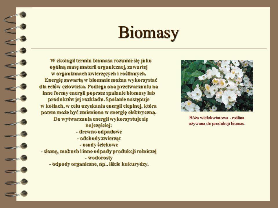 Biomasy W ekologii termin biomasa rozumie się jako ogólną masę materii organicznej, zawartej w organizmach zwierzęcych i roślinnych. Energię zawartą w