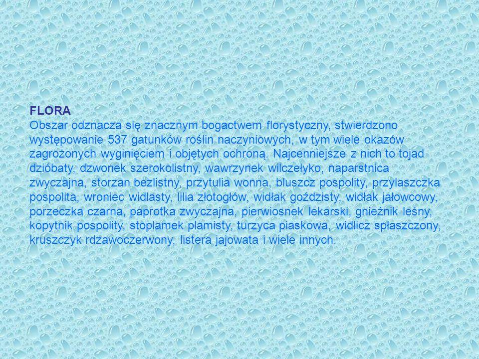 FAUNA Na obszarze ostoi występuje bardzo cenny bezkręgowiec umieszczony w Polskiej Czerwonej Księdze gatunków zagrożonych wyginięciem – skójka gruboskorupkowa.