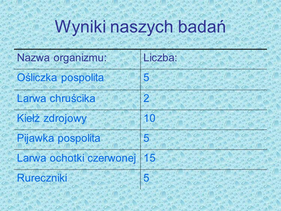 Wyniki naszych badań Nazwa organizmu:Liczba: Ośliczka pospolita5 Larwa chruścika2 Kiełż zdrojowy10 Pijawka pospolita5 Larwa ochotki czerwonej15 Rurecz