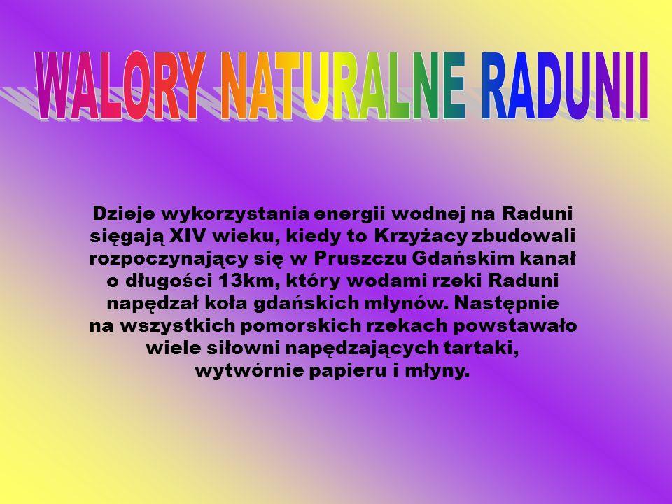 Dzieje wykorzystania energii wodnej na Raduni sięgają XIV wieku, kiedy to Krzyżacy zbudowali rozpoczynający się w Pruszczu Gdańskim kanał o długości 1