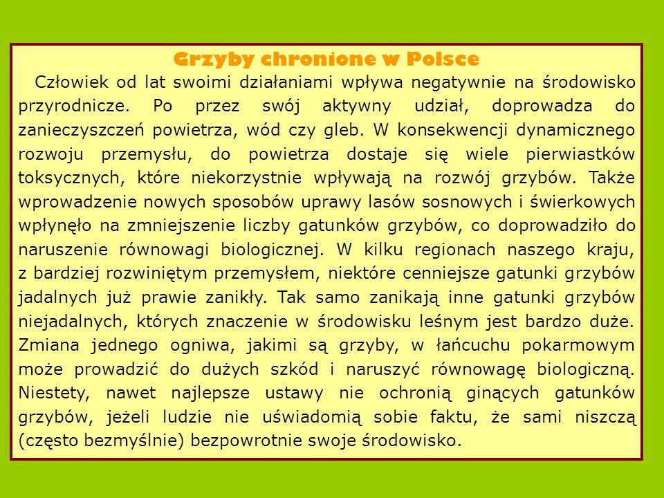 Grzyby chronione w Polsce Człowiek od lat swoimi działaniami wpływa negatywnie na środowisko przyrodnicze.