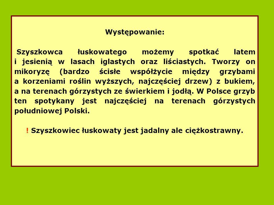 Występowanie: Szyszkowca łuskowatego możemy spotkać latem i jesienią w lasach iglastych oraz liściastych.
