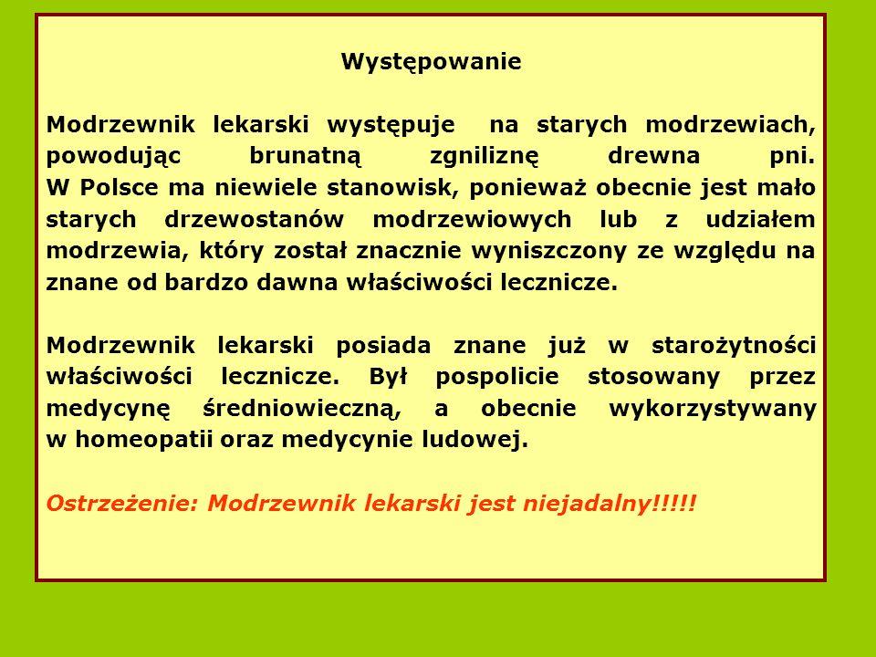 Występowanie Modrzewnik lekarski występuje na starych modrzewiach, powodując brunatną zgniliznę drewna pni.