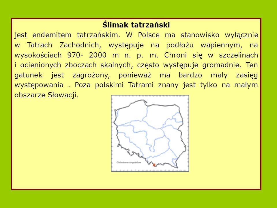 Ślimak tatrzański jest endemitem tatrzańskim.