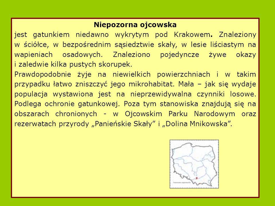 Niepozorna ojcowska jest gatunkiem niedawno wykrytym pod Krakowem.