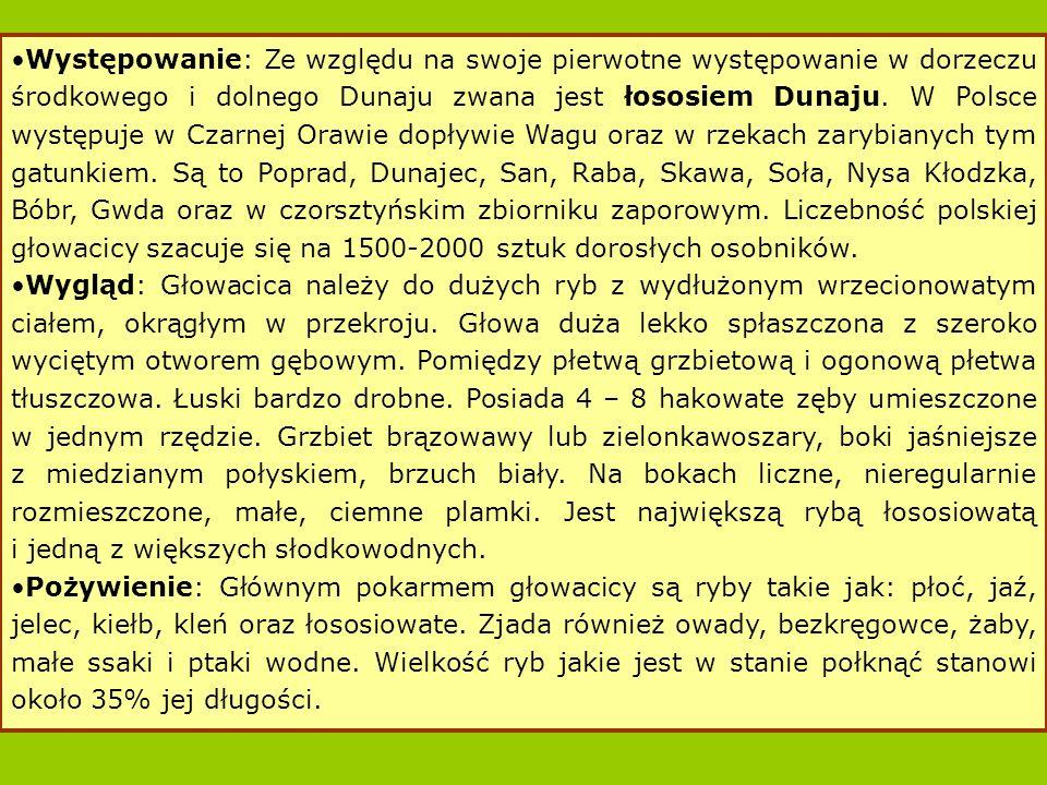 Występowanie: Ze względu na swoje pierwotne występowanie w dorzeczu środkowego i dolnego Dunaju zwana jest łososiem Dunaju.