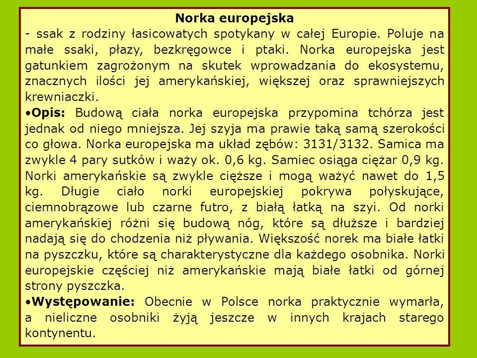 - ssak z rodziny łasicowatych spotykany w całej Europie.