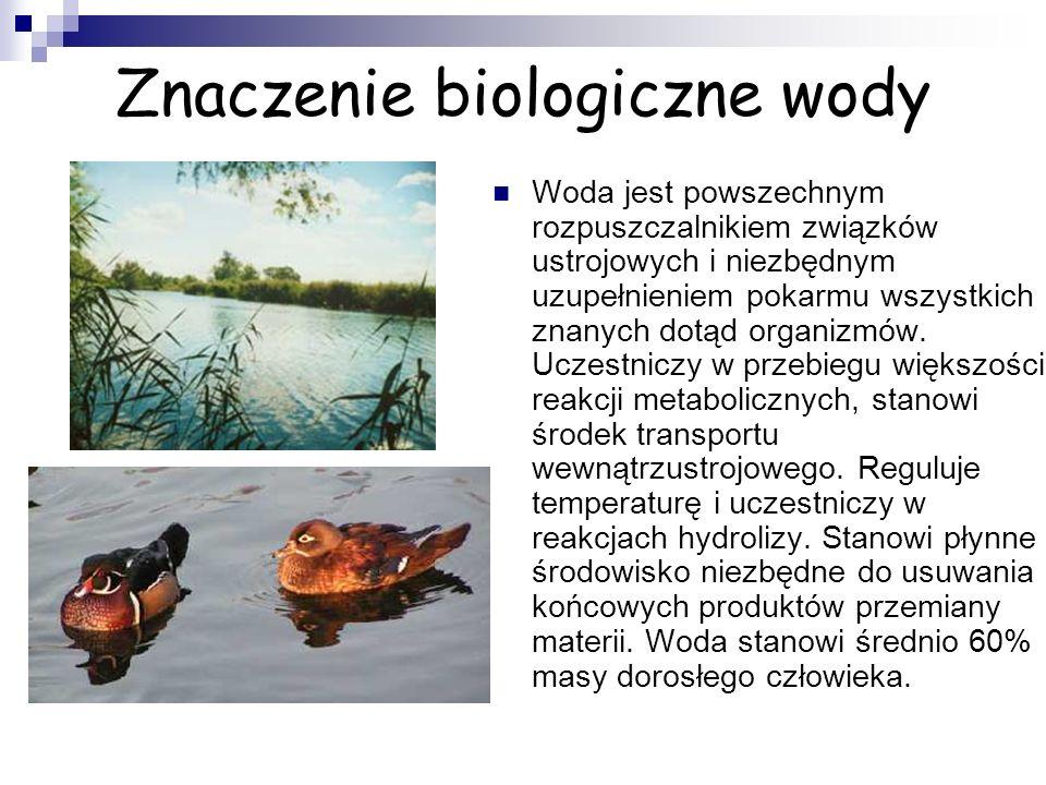 Znaczenie biologiczne wody Woda jest powszechnym rozpuszczalnikiem związków ustrojowych i niezbędnym uzupełnieniem pokarmu wszystkich znanych dotąd organizmów.