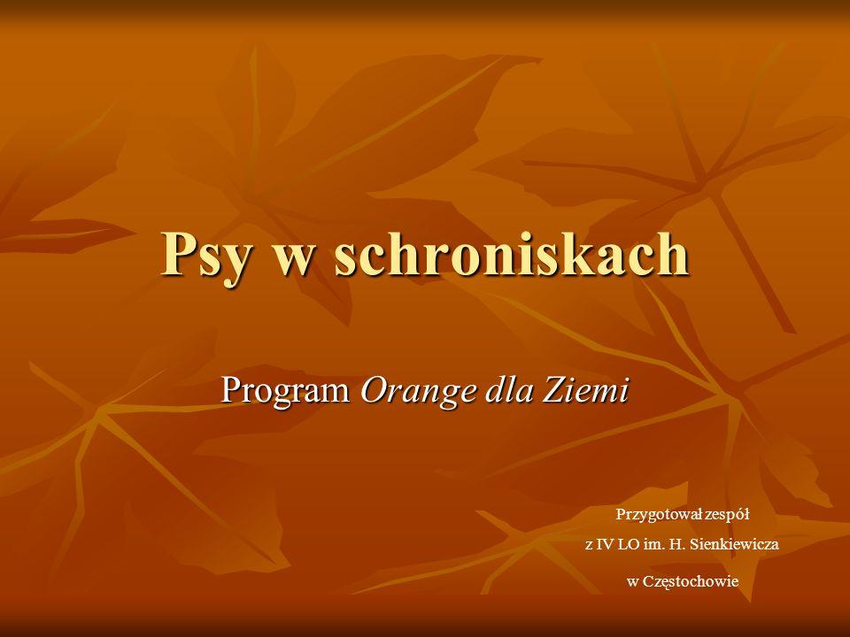 Psy w schroniskach Program Orange dla Ziemi Przygotował zespół z IV LO im. H. Sienkiewicza w Częstochowie