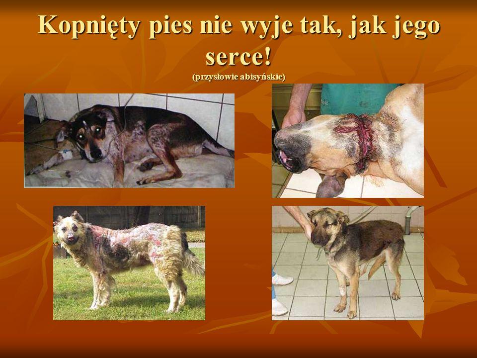 Kopnięty pies nie wyje tak, jak jego serce! (przysłowie abisyńskie)