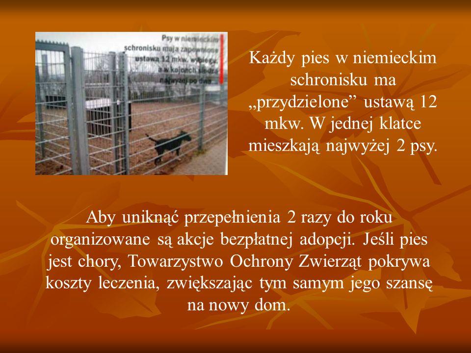 Każdy pies w niemieckim schronisku ma przydzielone ustawą 12 mkw. W jednej klatce mieszkają najwyżej 2 psy. Aby uniknąć przepełnienia 2 razy do roku o