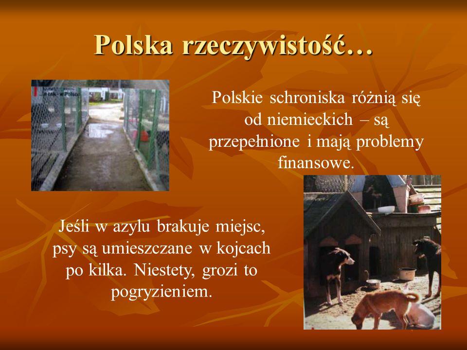Polska rzeczywistość… Polskie schroniska różnią się od niemieckich – są przepełnione i mają problemy finansowe. Jeśli w azylu brakuje miejsc, psy są u
