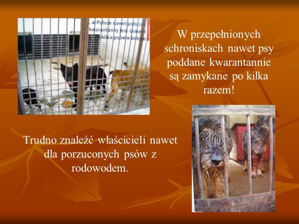 W przepełnionych schroniskach nawet psy poddane kwarantannie są zamykane po kilka razem! Trudno znaleźć właścicieli nawet dla porzuconych psów z rodow