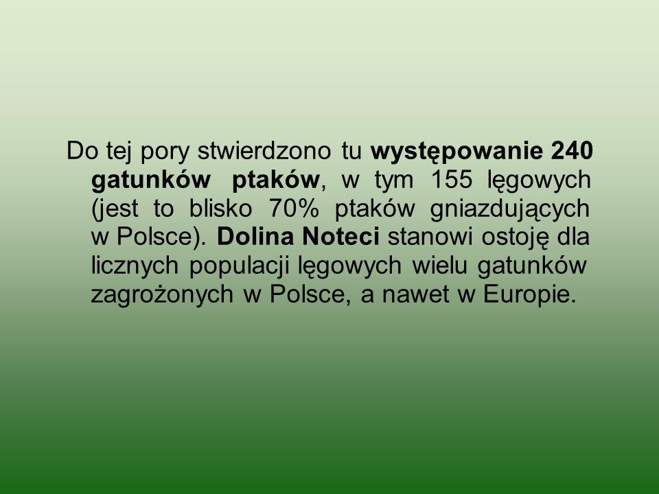 Do tej pory stwierdzono tu występowanie 240 gatunków ptaków, w tym 155 lęgowych (jest to blisko 70% ptaków gniazdujących w Polsce). Dolina Noteci stan