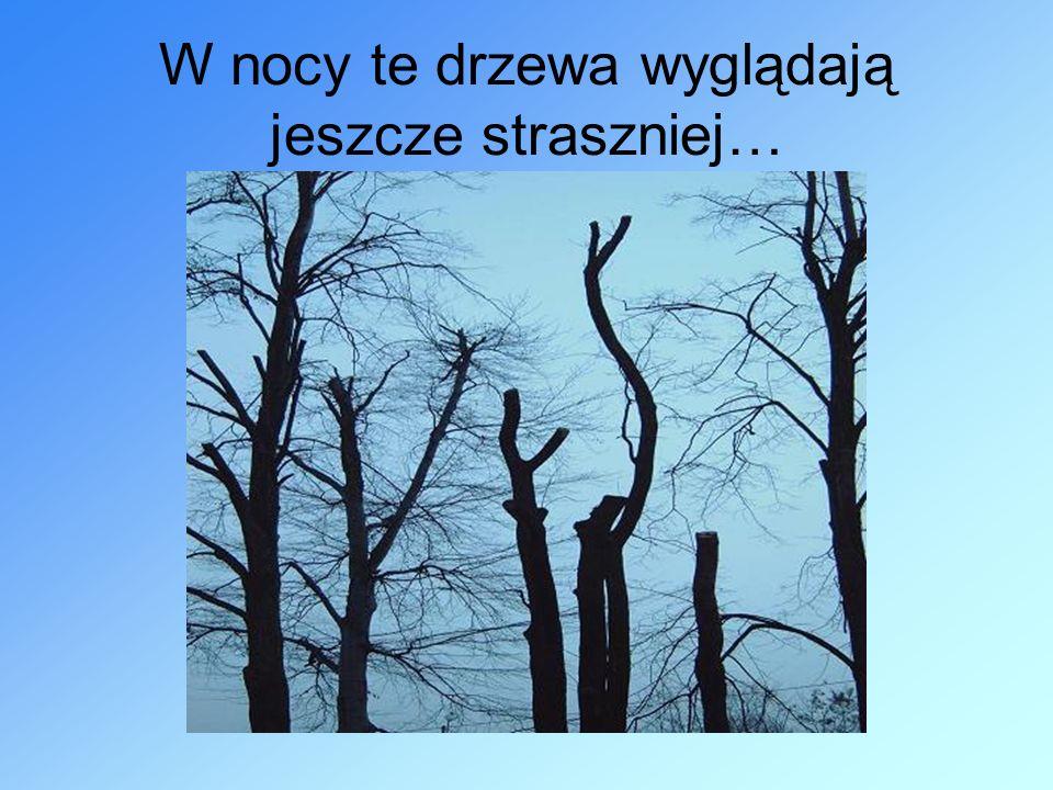 W nocy te drzewa wyglądają jeszcze straszniej…