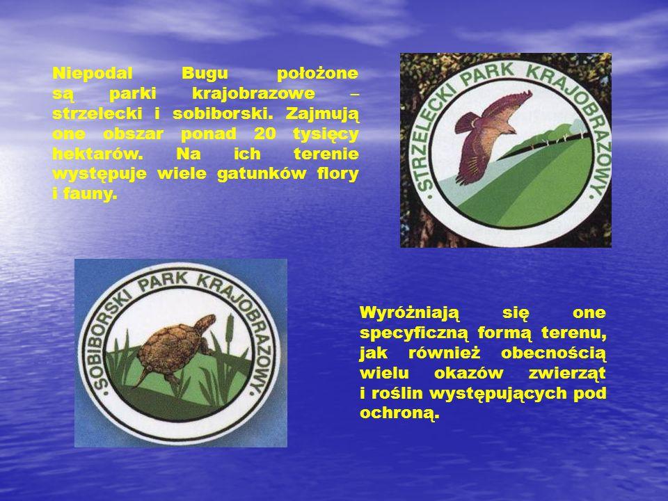 Niepodal Bugu położone są parki krajobrazowe – strzelecki i sobiborski. Zajmują one obszar ponad 20 tysięcy hektarów. Na ich terenie występuje wiele g