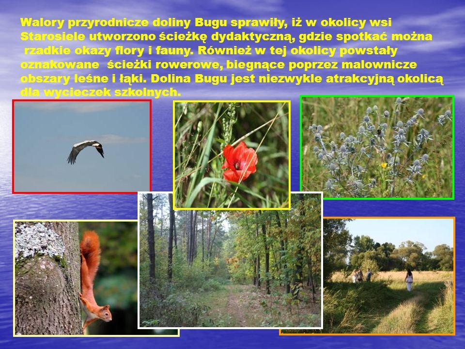 Walory przyrodnicze doliny Bugu sprawiły, iż w okolicy wsi Starosiele utworzono ścieżkę dydaktyczną, gdzie spotkać można rzadkie okazy flory i fauny.