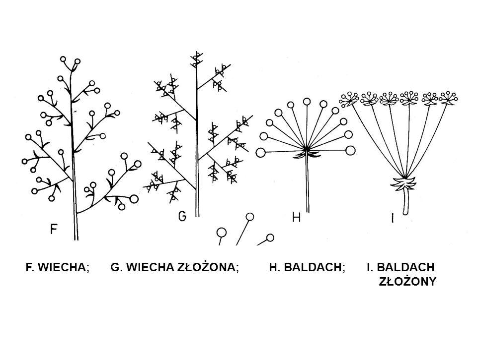 F. WIECHA; G. WIECHA ZŁOŻONA; H. BALDACH; I. BALDACH ZŁOŻONY