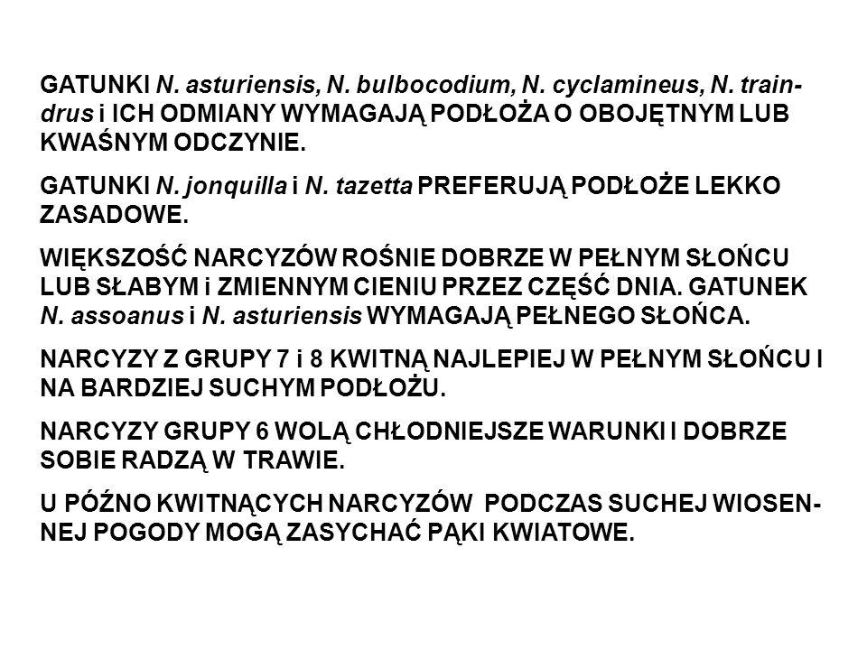 GATUNKI N. asturiensis, N. bulbocodium, N. cyclamineus, N. train- drus i ICH ODMIANY WYMAGAJĄ PODŁOŻA O OBOJĘTNYM LUB KWAŚNYM ODCZYNIE. GATUNKI N. jon