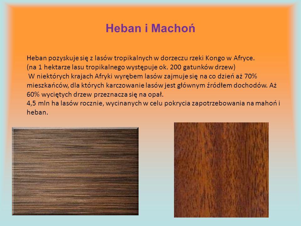 Heban i Machoń Heban pozyskuje się z lasów tropikalnych w dorzeczu rzeki Kongo w Afryce. (na 1 hektarze lasu tropikalnego występuje ok. 200 gatunków d