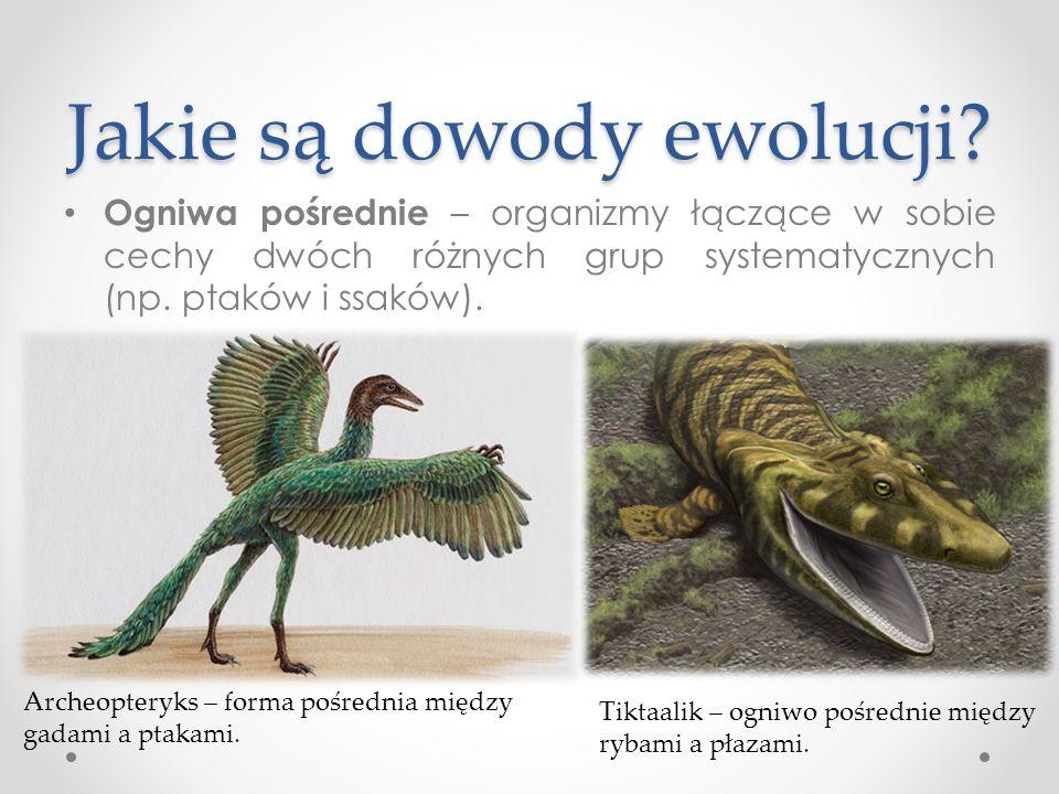 Jakie są dowody ewolucji.