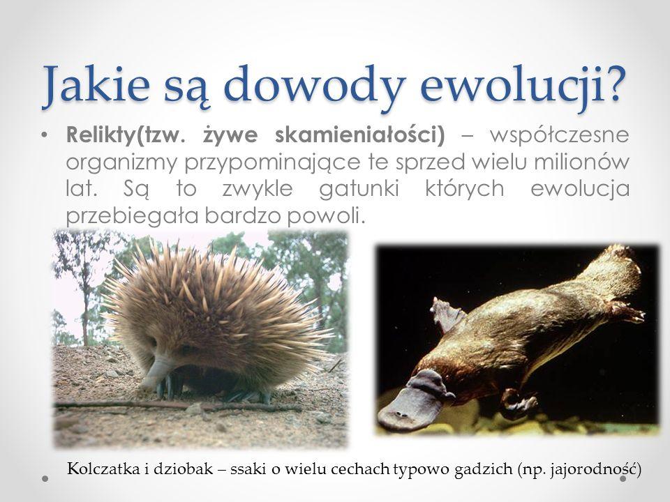Jakie są dowody ewolucji.Relikty(tzw.