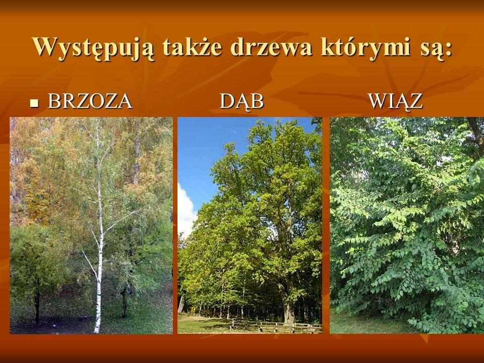 Występują także drzewa którymi są: BRZOZA DĄB WIĄZ BRZOZA DĄB WIĄZ