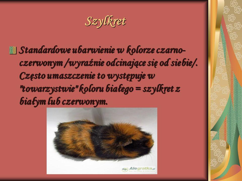 Rozetka Futerko świnki jest półdługie, ale sprężyste.
