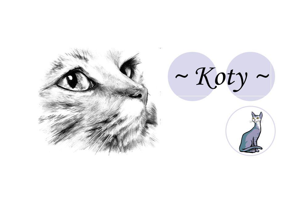 ~ Koty ~