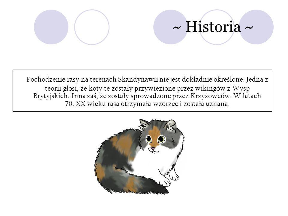 ~ Historia ~ Pochodzenie rasy na terenach Skandynawii nie jest dokładnie określone. Jedna z teorii głosi, że koty te zostały przywiezione przez wiking