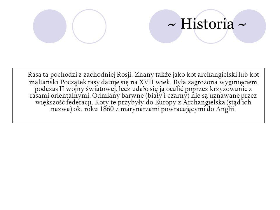 ~ Historia ~ Rasa ta pochodzi z zachodniej Rosji. Znany także jako kot archangielski lub kot maltański.Początek rasy datuje się na XVII wiek. Była zag