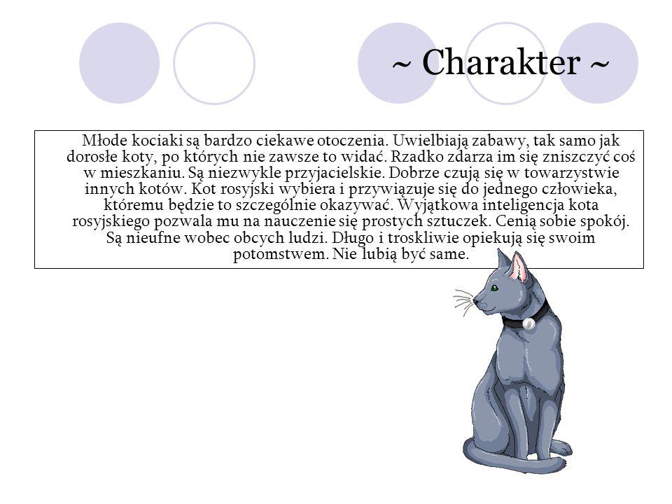 ~ Charakter ~ Młode kociaki są bardzo ciekawe otoczenia. Uwielbiają zabawy, tak samo jak dorosłe koty, po których nie zawsze to widać. Rzadko zdarza i