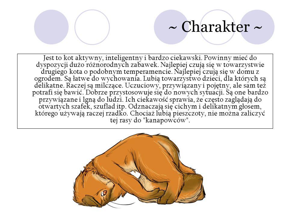 ~ Charakter ~ Jest to kot aktywny, inteligentny i bardzo ciekawski. Powinny mieć do dyspozycji dużo różnorodnych zabawek. Najlepiej czują się w towarz